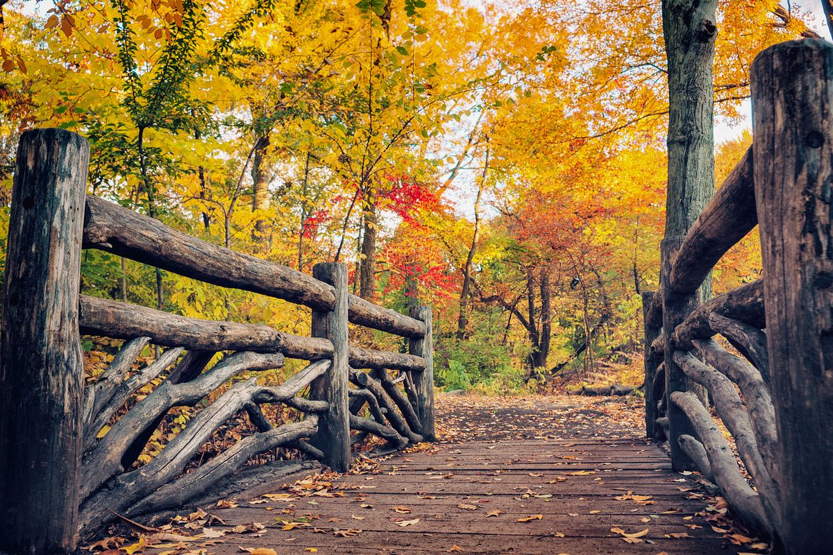 Fall In New York City Is One of the Most Incredible Coziest Times of the Season